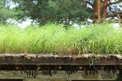 Suvel kasvab isegi katus
